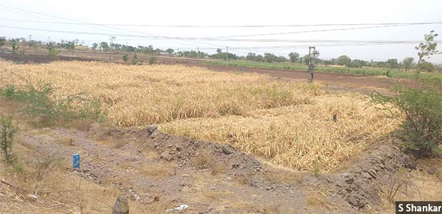 88 6% Of Karnataka's Area Under Drought As Govt Admits