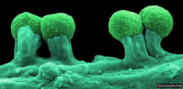 620_coli