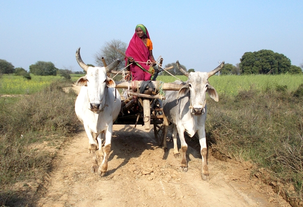 620_main_Woman Farmer Kalli in Banda - Copy