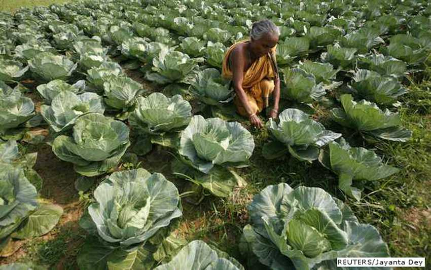 For First Time, A Seminal Change In India's Agriculture