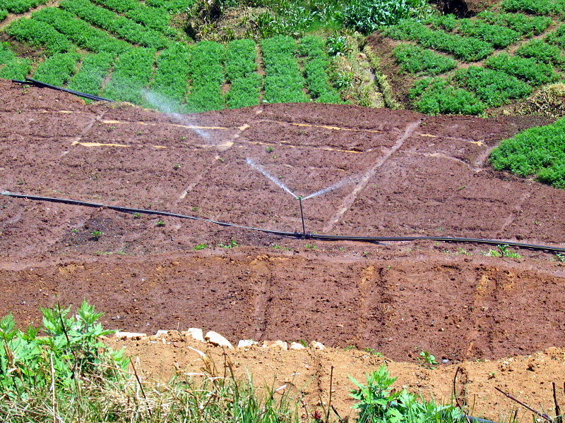 Crop_seedling_beds_irrigated_in_Kerala_India_2008