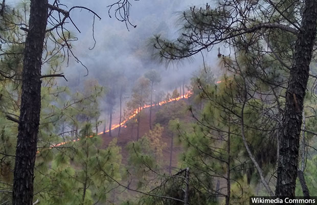 Forest_fire_620