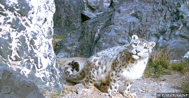Gobi Gurvansaikhan National Park_South Gobi_Pic Credit-SLT_SLCF_GGNP