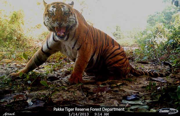 Pakke Tiger Reserve Forest Department_620