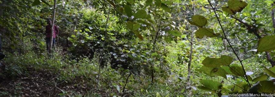 biodiversity_960