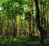 forest-SC-WIDTH 160px_HT 150 px